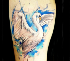 Watercolor swan by Adam Kremer