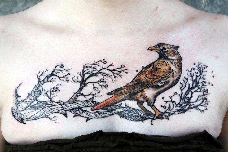 Realistic little bird by David Hale